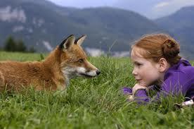 le renard 2