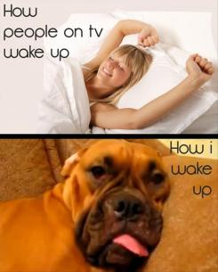 People on TV waking up